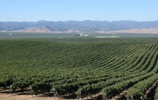 Valarm Monitoring Harvesters at Scheid Vineyards Blog Post 1 - 6 copy