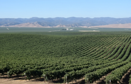 Precision Agriculture / Viticulture + Real-Time Mapping