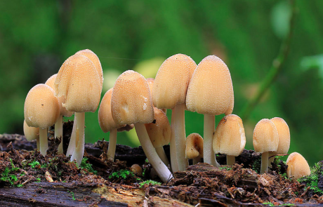 Essential Elements For Your Mushroom Monitoring Needs – Remotely Monitoring Temperature, Humidity, Air Quality / CO2, Soil Moisture of Your Mushrooms with Industrial IoT Sensors