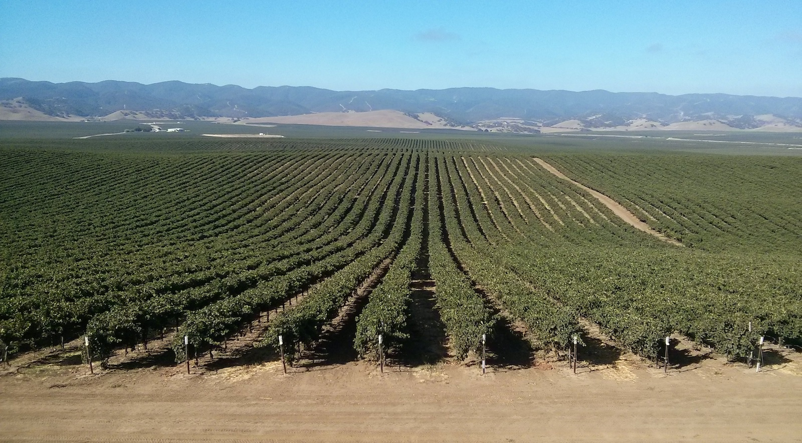 Valarm Scheid Vineyards Photo California Cropped